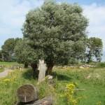 Het Buytenpark (Joke Kerkvliet)