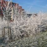 Witte bomen en struiken (2)