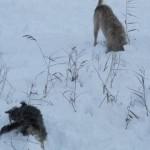 Honden in de sneeuw