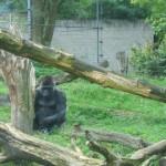 De apen