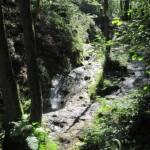 Bos rondom Le Ninglinspo