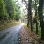 Mooie wandelroute vanaf Coreglia Antelminelli (2)