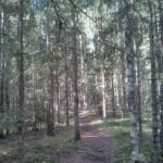 Skuleskogen National Park (2)