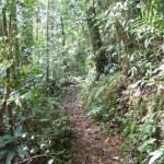 Wandeling op Mount Kinabalu (1)