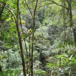 Wandeling op Mount Kinabalu (2)