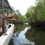 De mangrove bij Sepilok