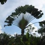 Een mooie waaier palm