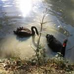 Le Parc Zoologique Cerza (9)