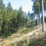 Indrukwekkende bossen (1)