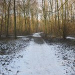 Bos in de winter (1)
