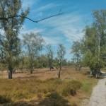 Heidelandschap (1)
