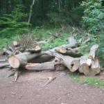Stormschade in het bos