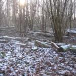 Bos in de winter (3)