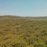 Heidelandschap (5)