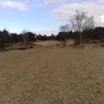 Nationaal Park de Loonse en Drunense Duinen (3)