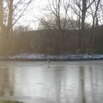 Ooievaar op het ijs