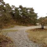 Nationaal Park de Loonse en Drunense Duinen (5)