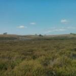 Heidelandschap (7)