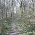 Bos en akkerland (2)