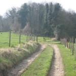 Bos en akkerland (4)