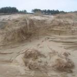 Mooie duinen (4)