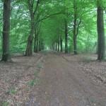 Deze brede weg volgenden wij voor best wel een lange tijd in het bos.