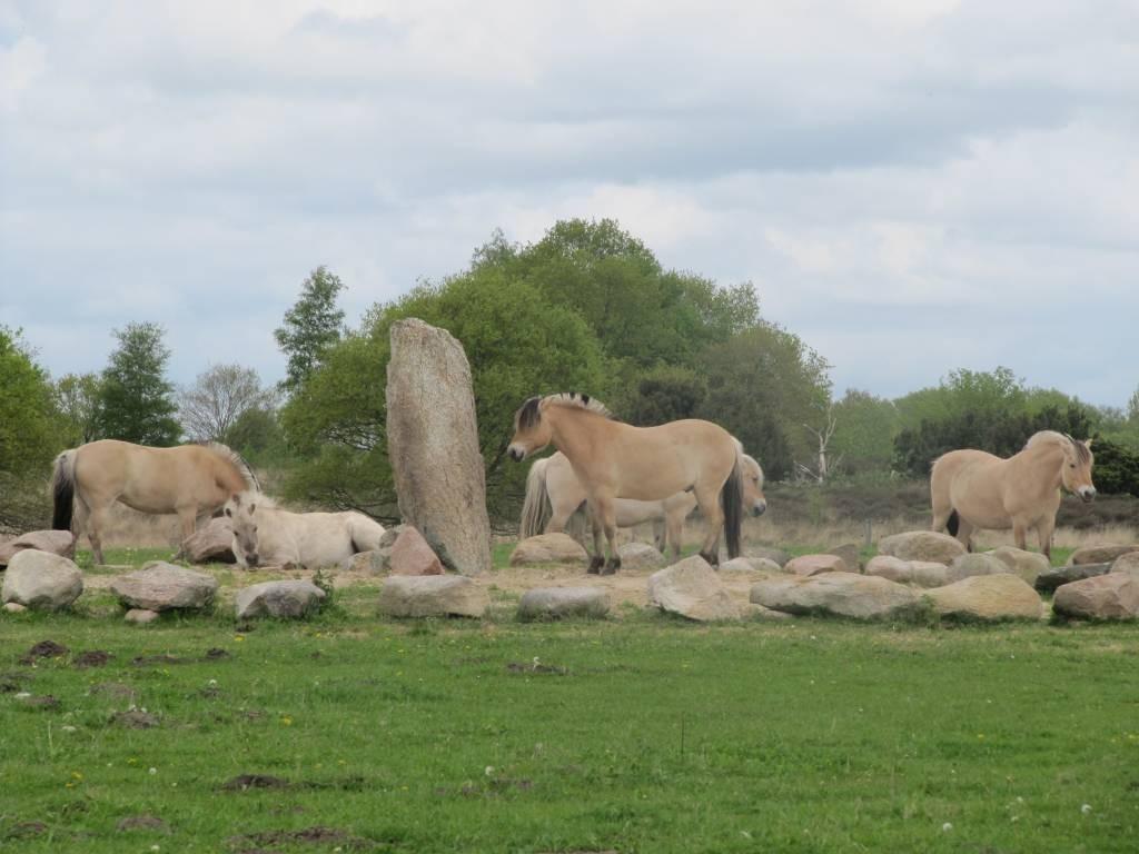 Bij het begin van het natuurgebied Balloërveld staat dit monument langs het Pieterpad.
