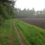 Hier een bewijs dat bos en landbouwgrond heel goed samengaan.