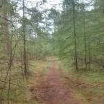 Dit was een heel leuk bospaadje. Lekker smal en bezaaid met losse takken.