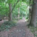 Een leuk paadje door het bos in Wassenaar.