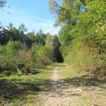 Een heel fraai bos (1)