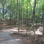 Een heel fraai bos (2)
