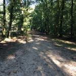 Een heel fraai bos (3)