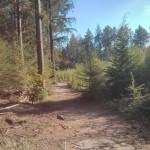Een heel fraai bos (6)
