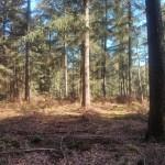 Een heel fraai bos (7)