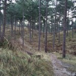 Het bos in Boswachterij Westerschouwen is erg fraai.