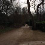 In Renesse is dit mooie straatje met erg fraai gevormde boom te vinden.