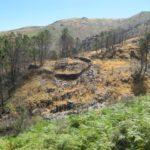 Dit gebied is al wat langer geleden geraakt door een bosbrand, dat is nog te zien.