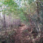 Dit was ook zeer fraai bospad waar wij over wandelden.