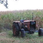 Bijna op het einde van de wandeling zagen wij deze traktor in het maisveld staan.