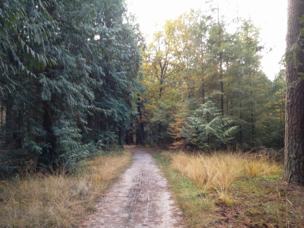 Over dit fraaie bospaadje liepen wij al vrij snel na de start van de wandeling.