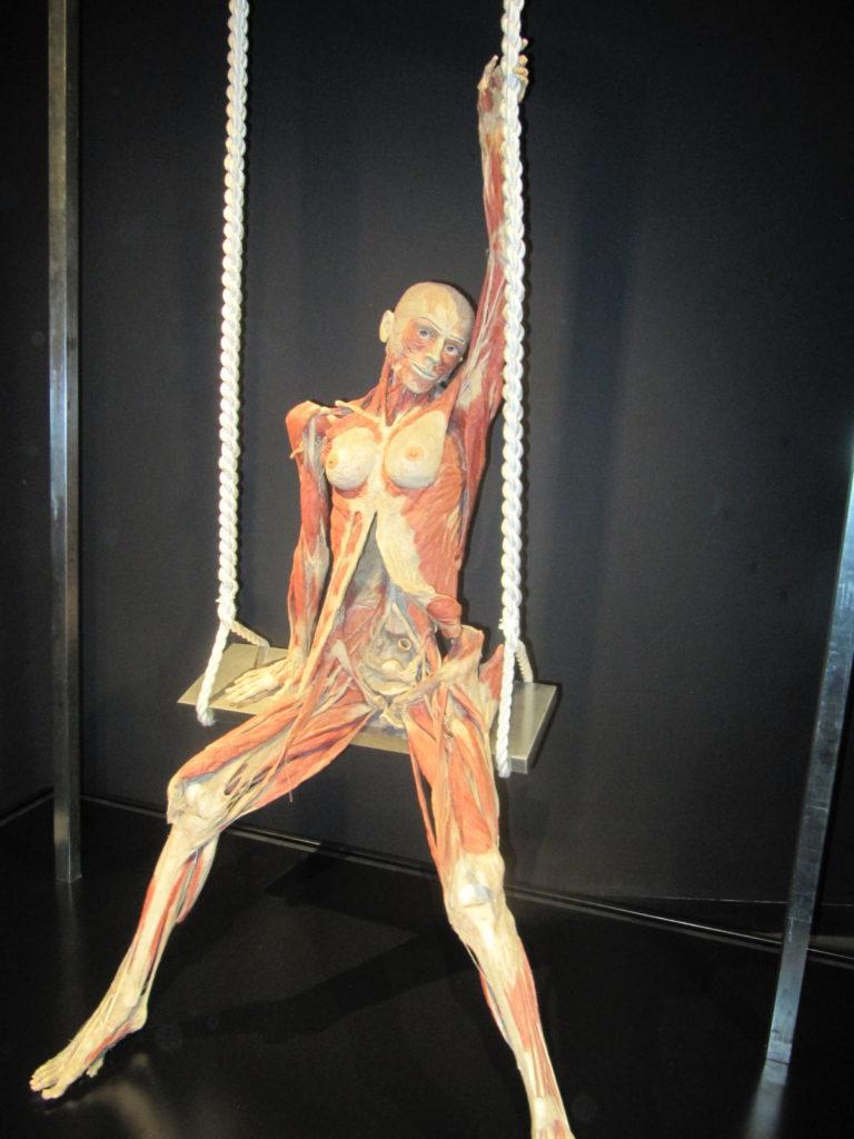 In Body Worlds zie je aantal van dit soort preparaten. Overleden mensen ontdaan van hun vel en in een bepaalde positie gezet, zodat je alle spieren goed kan zien.