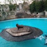 Van de zeeleeuwen was er eentje lekker aan het donderjagen met de waterstraal en de ander lag lekker te poseren.