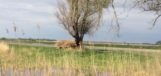 Bij Nederland werd heel veel gedaan aan rietoogst.