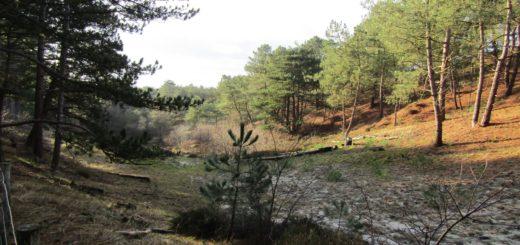 Dat duinen ook een heel mooi bos kunnen bevatten, bewijst deze foto.