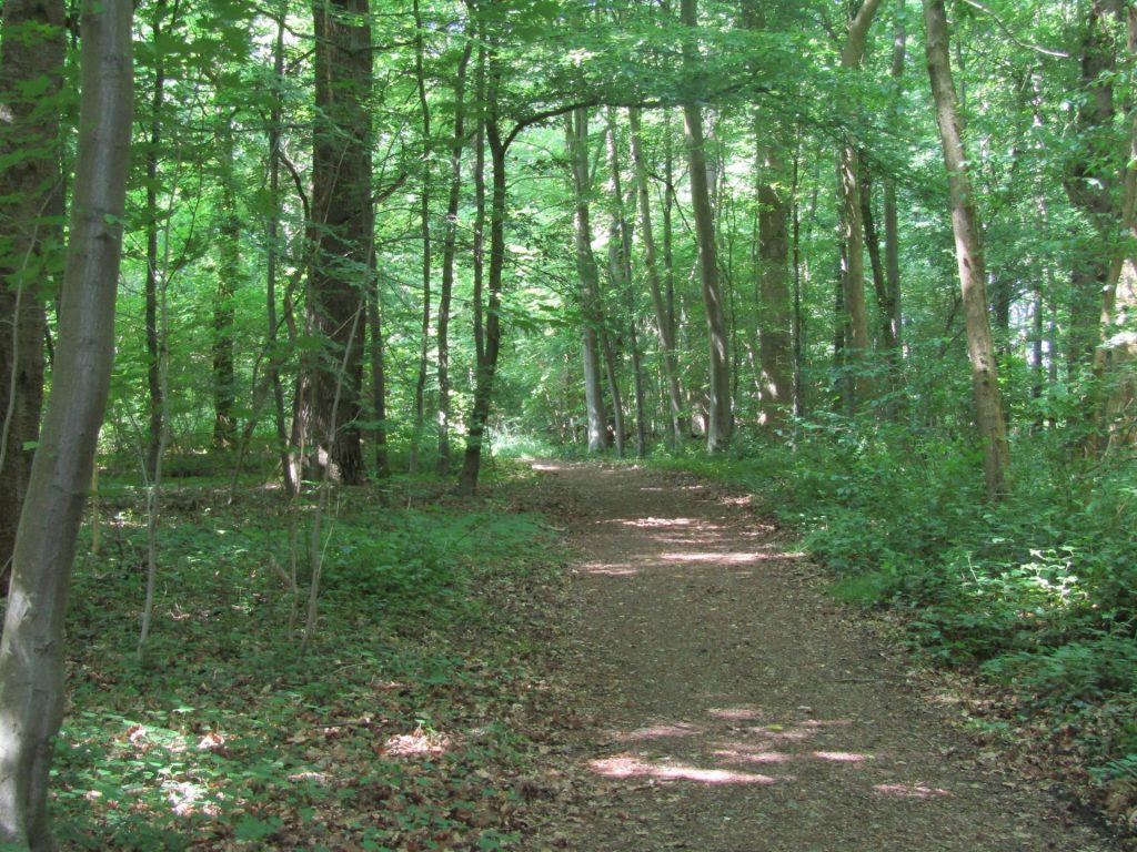 Vlak voor Valkenburg liepen wij nog door dit mooie bos