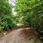 Een heel fraai pad in een heel fraai bos.