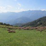 Een mooie grasweide en een heel fraai uitzicht.