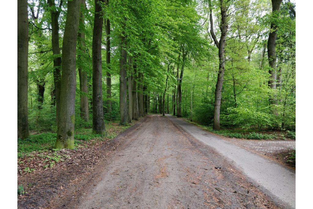 In het begin van de wandeling liepen wij over dit mooie bosweggetje.