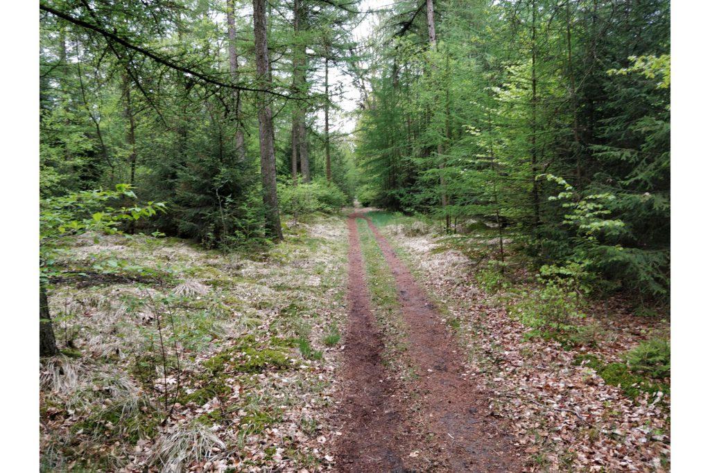 Een leuk pad dwars door het bos heen.